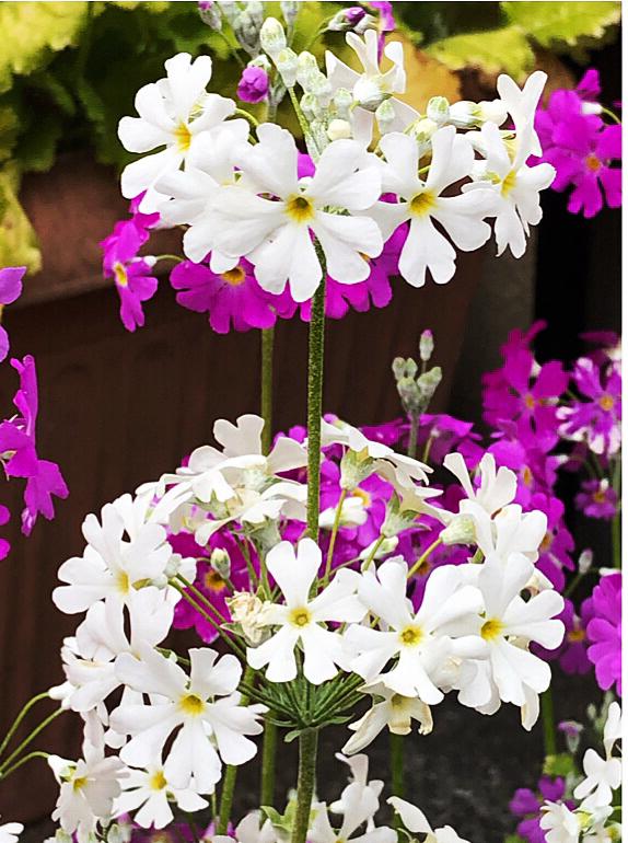 小花咲く 揺らめく姿 春一番